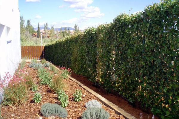 Valla verde vallado jardines - Plantas para vallas ...